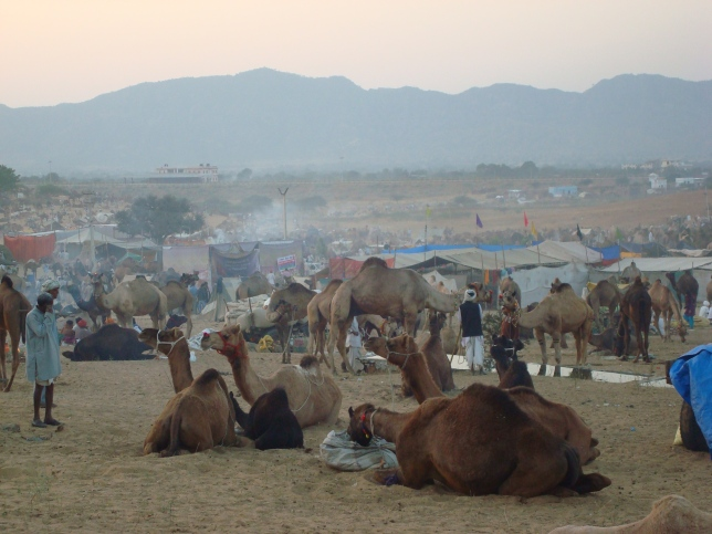 Camels campgrounds
